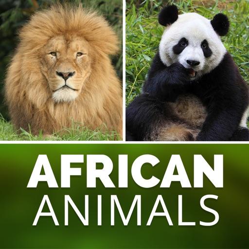 African American Zoo Wild Safari Animal's Pictures