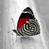Butterfly Wallpapers - Beautiful Butterflies Pics