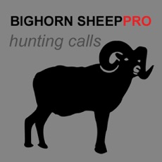 Activities of REAL Bighorn Sheep Hunting Calls -- (ad free) BLUETOOTH COMPATIBLE