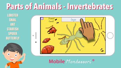 Parts of Invertebrate Animals screenshot 1