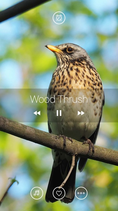 download Bird Sounds, Listen & Relax