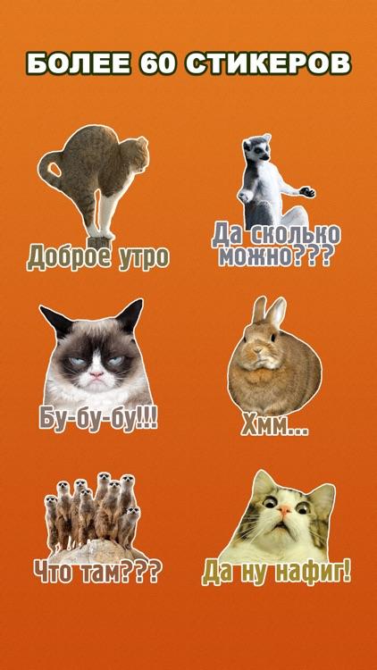 Комичные животные