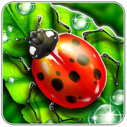 Bug Match!