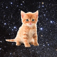 Codes for Space Kitties - funny game that makes you save kittens by tapping Hack