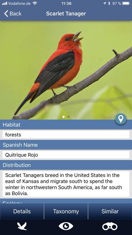 Bird Id USA backyard birds
