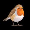Collins British Bird Guide