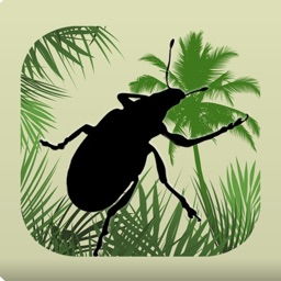 Palm Screening Aid to Pests Key