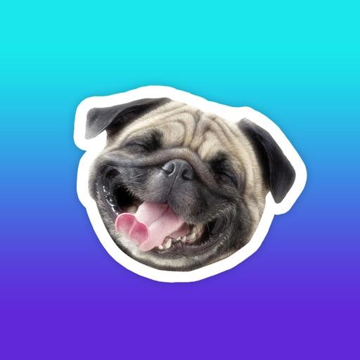 Crazy Animals! Funny animal reaction meme stickers