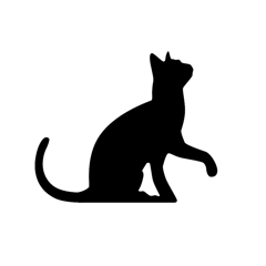 Un traducteur chat luxe