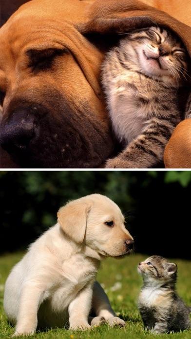Cats Dogs Wallpapers Hd Cute Puppies Kittens Apprecs