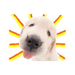 Sweety Dog Lover