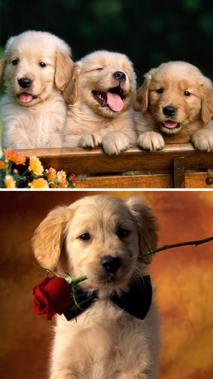 Cute Puppy Wallpapers - Little Dog's Paws Images by ...