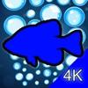 Aquarium 4K - Ultra HD Video