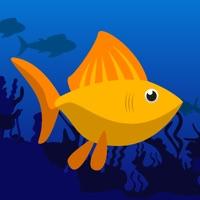 Codes for Fish Rush - Endless Fish Jump Game Hack
