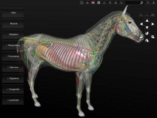 3D Horse Anatomy Software | App Price Drops