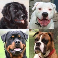 Codes for Dogs Quiz: Photos of Cute Pets Hack