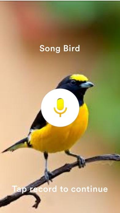 SongBird Pro. screenshot one