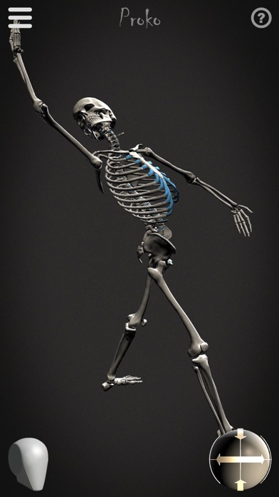 Skelly - Poseable Anatomy Model for Artists - AppRecs