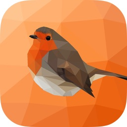 Nature Sounds: Zen Sounds for Relax, Focus and Sleep