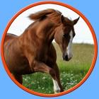 cavalli irresistibili per i bambini - senza annunci icon
