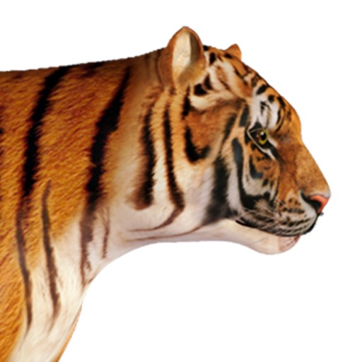 Tiger 3D