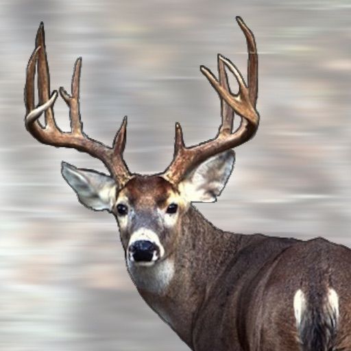 Ron Spomer's Everything Whitetail