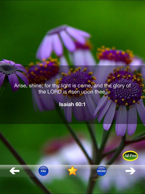 christian bible verse of the day