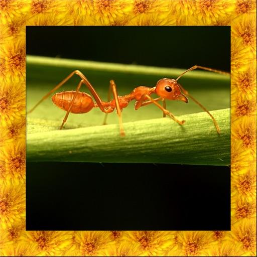 Fire Ant Simulator 3D