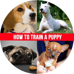 How to Train a Puppy - House Train a Puppy When You Work All Day