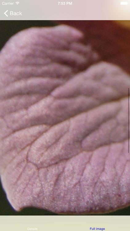 Herbs as Medicine Lite screenshot-3
