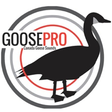 Activities of Goose Hunting Calls-Goose Sounds-Goose Call App