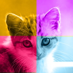 Kittens vs. You - Free Trivia and Quiz Game for Kittens of All Ages