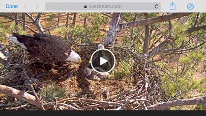 Berry College Eagle Cameras-1