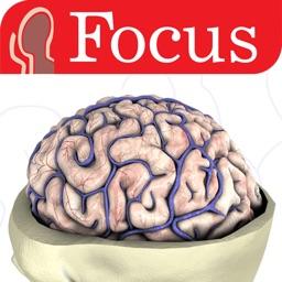 NEUROANATOMY - The Focus Digital Anatomy Atlas
