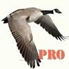 Goose Hunting Pro
