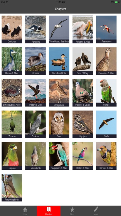 Birding In Southern Africa