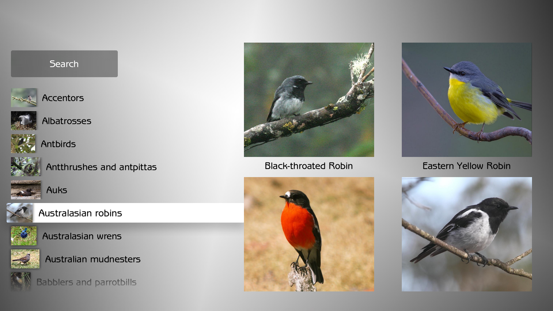 Birds Master screenshot 4