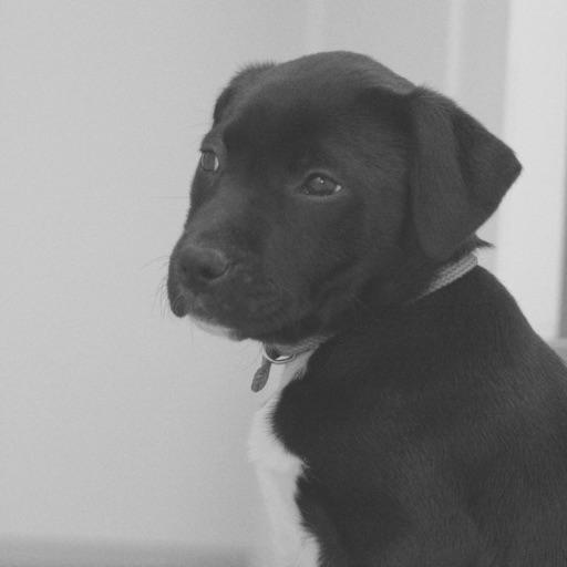 Puppy Calmer