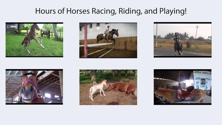 HD Horses TV