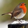 Discover British Birds