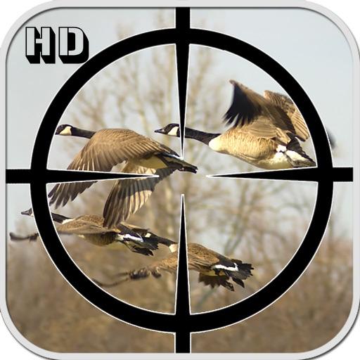 Birds Hunting 2016