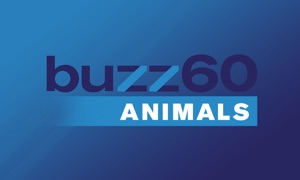 buzz60 Animals