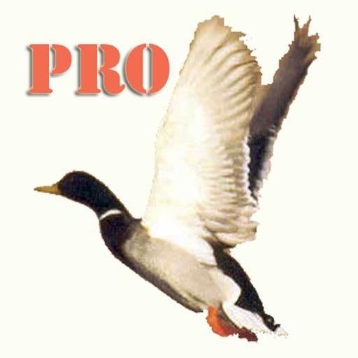 Duck Hunting Pro