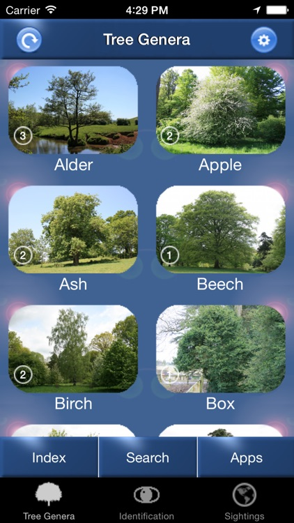 Tree Id Netherlands - Identification Guide to Trees