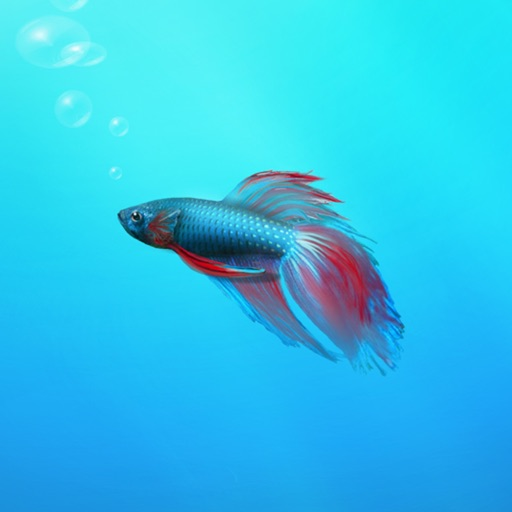 Aquarium Builder: My Pet Fish Tank Maker