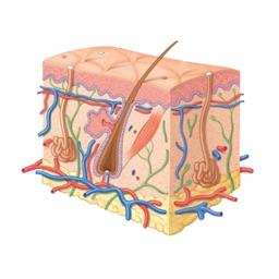 Prescrições Médicas em Dermatologia