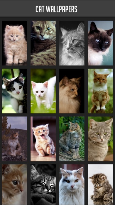 Cat Wallpapers!Screenshot von 1