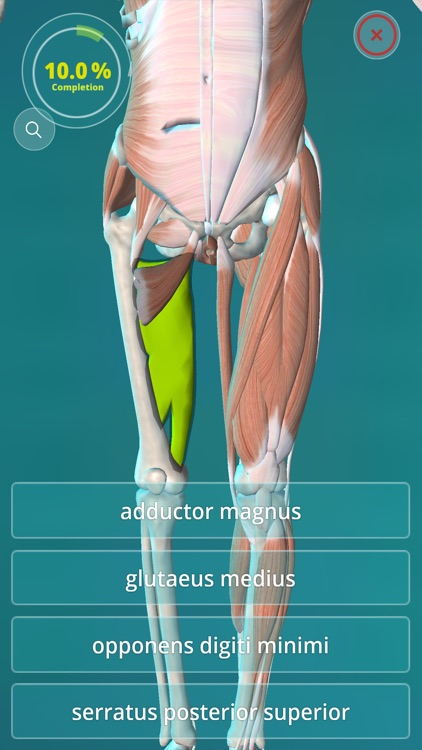 Anatomy Quiz - muscles and bones screenshot-1