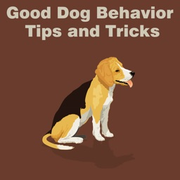All about Good Dog Behavior Tips and Tricks