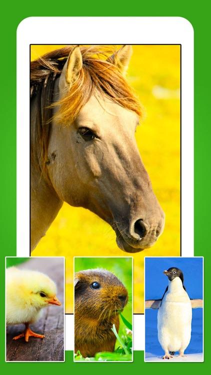 Animals - Cute Animal Wallpapers & Wild Life Backgrounds screenshot-3
